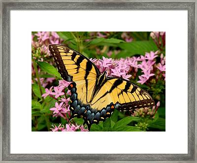 Painted Wings Framed Print