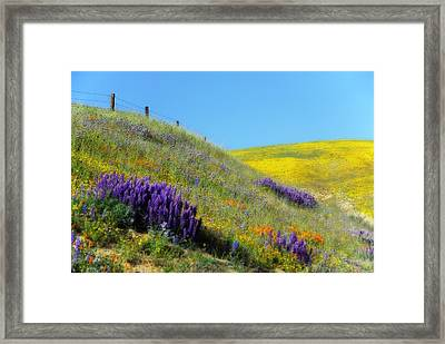 Painted With Wildflowers Framed Print by Lynn Bauer