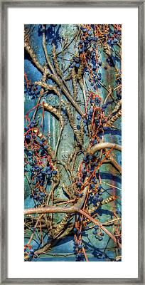 Painted Woodbine Framed Print by Joann Vitali