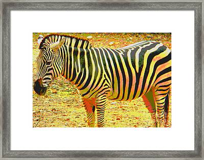 Painted Zebra Framed Print