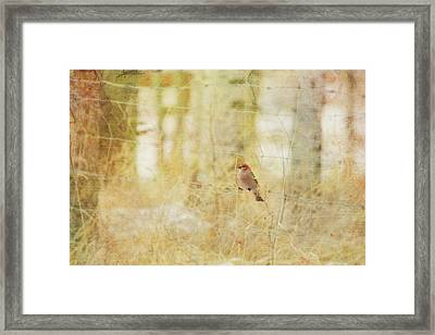 Painterly Image Of A Male Pine Grosbeak Framed Print by Roberta Murray