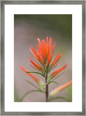 Painterly Paintbrush Framed Print