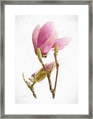 Painterly Pink Magnolia Framed Print