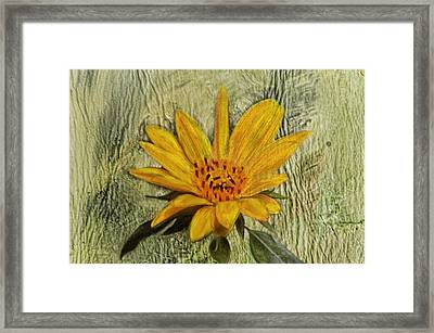 Painterly Sunflower Framed Print by Sandi OReilly
