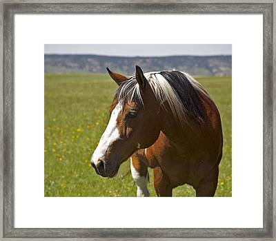 Paintin' Summer Framed Print