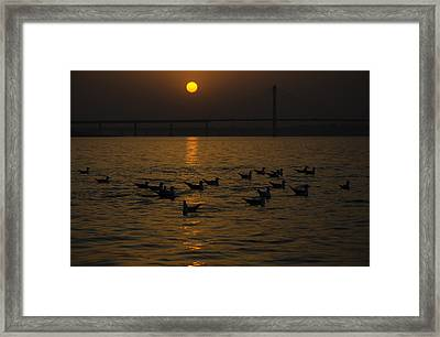 Painting A Golden Picture Framed Print by Rohit Chawla