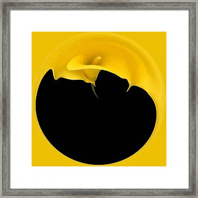 Painting The Calla Lily Framed Print by Cyndy Doty