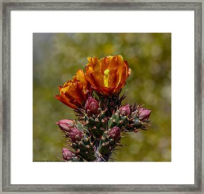 Framed Print featuring the photograph Painting With Nature by Elaine Malott