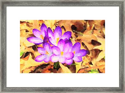 Paintography Of Spring Crocus Framed Print by Maggie Vlazny