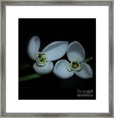 Framed Print featuring the photograph Spring  Is Coming by Marija Djedovic