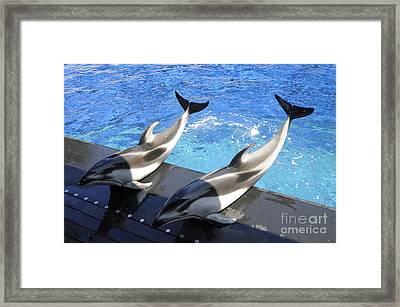Pair Of Dolphins Framed Print by Brenda Kean
