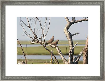 Pair Of Doves Framed Print