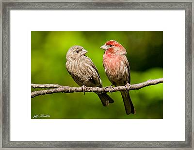 Pair Of House Finches In A Tree Framed Print