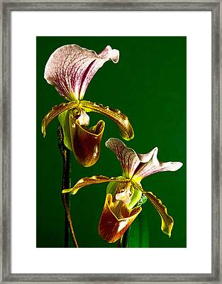 Pair Of Lady Slipper Orchids Framed Print