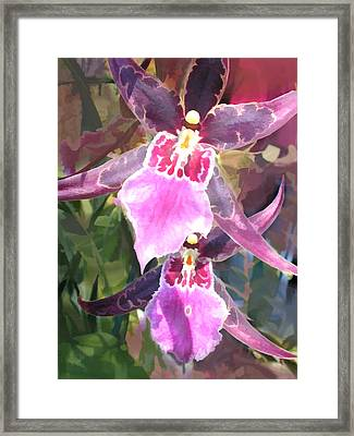 Pair Of Purple Cattleya Orchids Framed Print