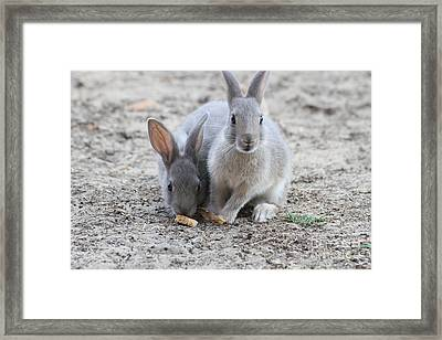 Pair Of Rabbits With The Soft Hair And Long Ears Framed Print