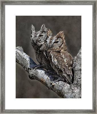 Pair Of Screech Owls Framed Print by JRP Photography