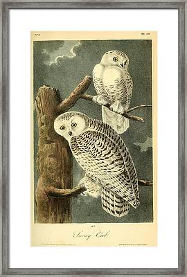 Pair Of Snowy Owls Framed Print