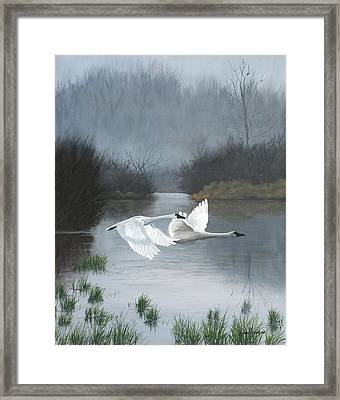 Pair Of Swans Framed Print by Julie Peterson