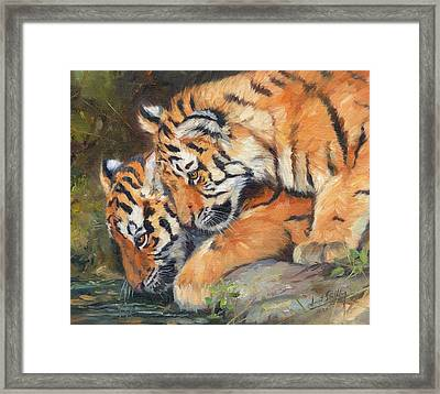 Pair Of Tiger Cubs Framed Print by David Stribbling