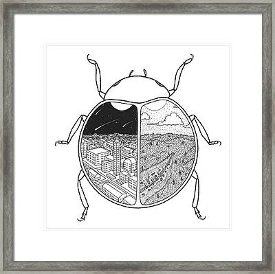 Paired Beetle Framed Print by Rob Messick