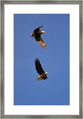 Pairs In Flight And Life Framed Print