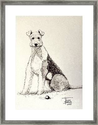 Pal The Airedale Framed Print