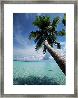 Palau, Micronesia, Palm Tree At Palau Framed Print by Stuart Westmorland