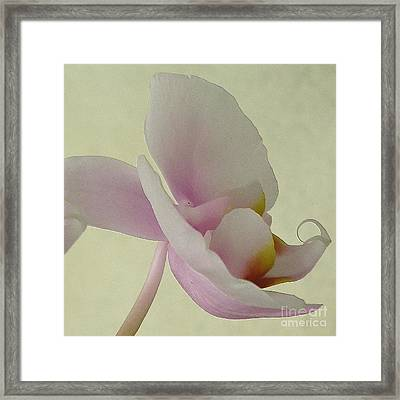 Pale Orchid On Cream Framed Print by Barbie Corbett-Newmin