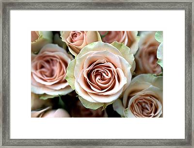 Pale Pink Roses Framed Print by Kathy Yates