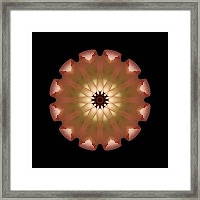 Framed Print featuring the photograph Pale Pink Tulip Flower Mandala by David J Bookbinder