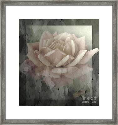 Pale Rose Photoart Framed Print by Debbie Portwood