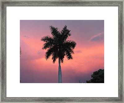 Palm Against Salmon Pink Framed Print by Beth Williams