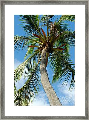 Palm And Sky Framed Print by Kathy Gibbons