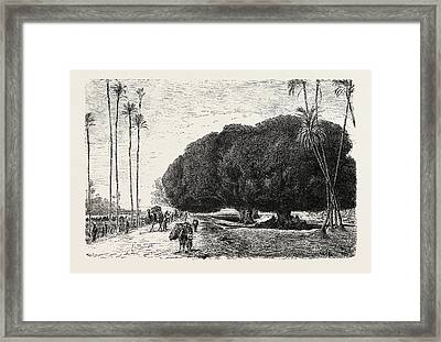 Palm And Sycamore Framed Print by Litz Collection