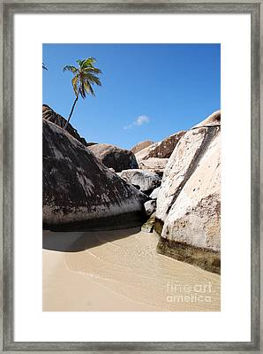 Palm At The Baths Virgin Islands Framed Print