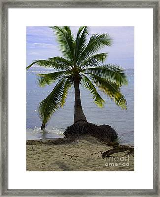 Palm At The Edge Of The Sea Number Two Framed Print