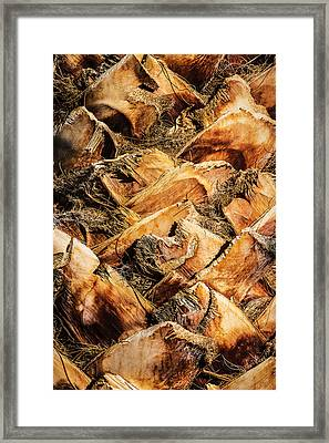 Palm Bark Framed Print