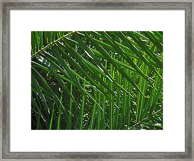 Palm Crosshatch Framed Print by Rona Black