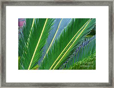Palm Cycas Fronds Framed Print