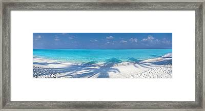 Palm Escape Framed Print by Sean Davey