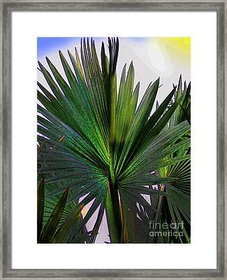Palm Fan In David - Panama Framed Print by Al Bourassa