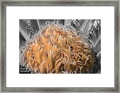 Palm Flower Framed Print by Augusta Stylianou