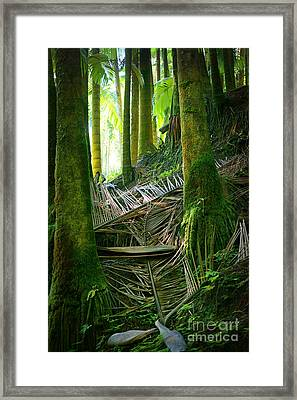 Framed Print featuring the photograph Palm Forest by Ellen Cotton