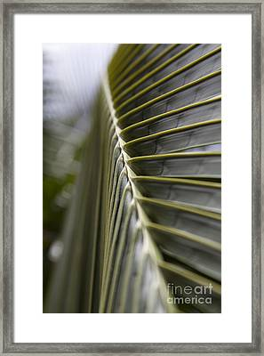 Palm Frond Botanical Abstract Framed Print by Sharon Mau