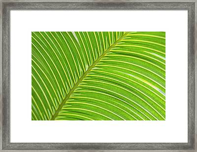 Palm Frond Diagonal (large Format Sizes Framed Print by Sheila Haddad