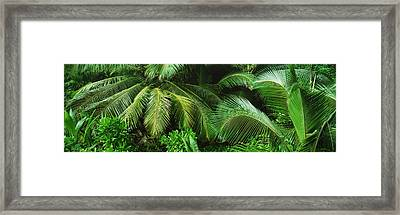 Palm Fronds And Green Vegetation Framed Print