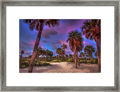 Palm Grove Framed Print