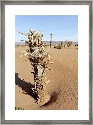Palm Grove Over-run By Sand Framed Print