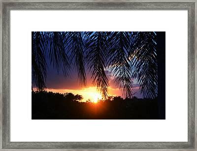 Palm Horizon Framed Print by Laura Fasulo
